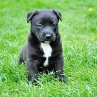 Hundetransportbox - Kleine Hunde