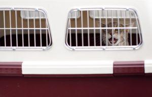 Hundetransportbox - das Gewicht entscheidet über Pasagierkabine oder Laderaum