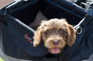 Hunderucksack - praktisch für Hund und Herrchen
