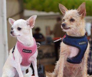 HUnderucksack für kleine Hunde - hilfreich im Alltag