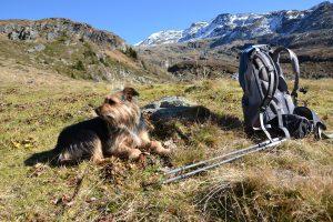 Hunderucksack für mittelgroße Hunde - Unterstützung auch beim Wandern
