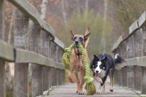 Rucksack für Hunde - mit großen Hunden wandern