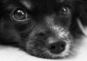Hundetransportbox für jeden Hund