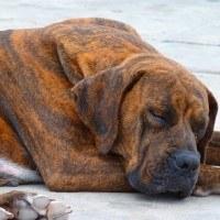 dog-43195_640-200x200