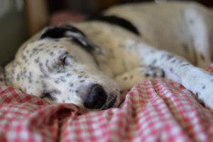 Faltbare Hundetransportbox bietet Rückzugsmöglichkeit
