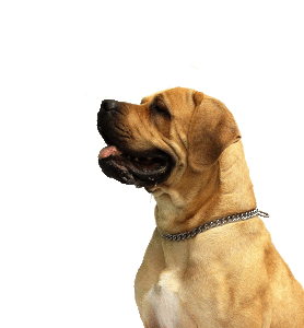 Hundetransportbox benötigst
