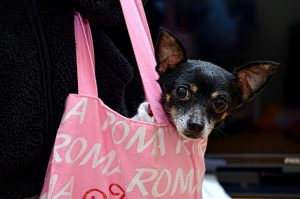 Alternative zum Hunderucksack